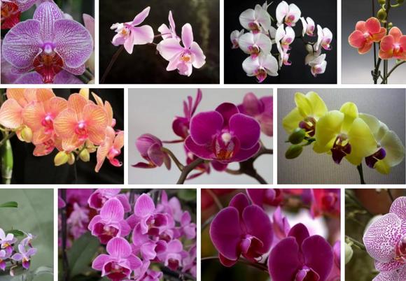 Клуб орхидей москва бурлеск москва клуб отзывы