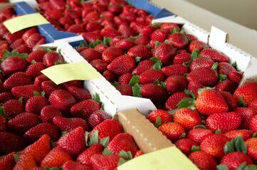 Strawberry-Festival-Best-Flat-Competition